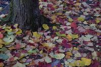 心淋しくなる季節には要注意~ヴェルレーヌの詩「落葉」・上田敏の訳